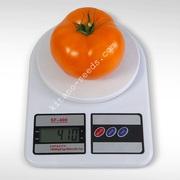 Семена оранжевого низкорослого томата АЙСАН F1